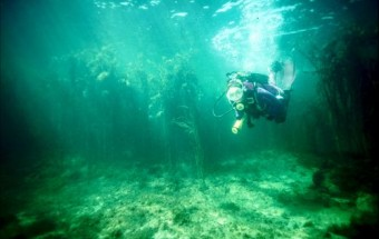 plongée sous marine en Bretagne